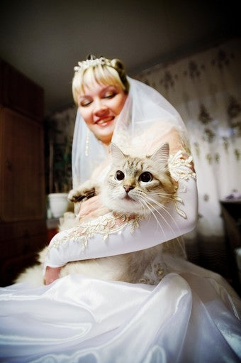 Handy Map Demonstrates Where You Can Marry Your Cat But Not Your Girlfriend