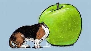I Ate an Apple