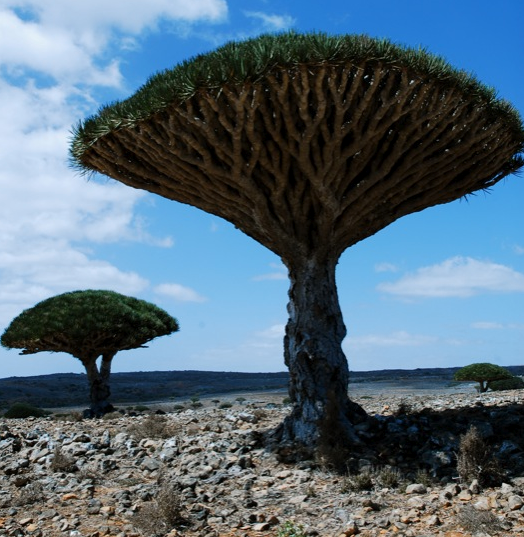 Where on Earth do these extraterrestrial toadstool trees grow?