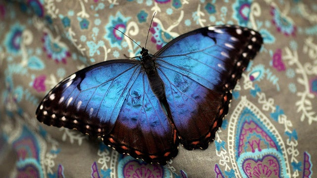 Colombian Company Uses Butterflies To Change Women's Lives