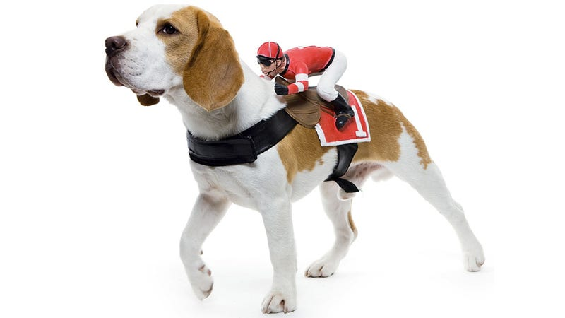 Everything You Need To Completely and Utterly Humiliate Your Pet