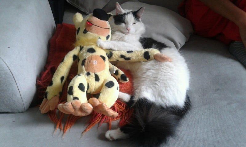 Extracuki: Nem hagyja a macska, hogy megsétáltassam a kutyát