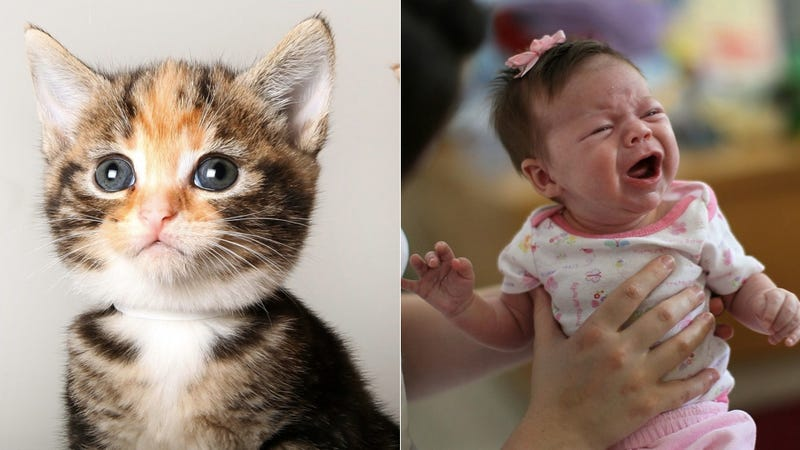 Finally, A Way to Turn Facebook Baby Pictures into Adorable Cats