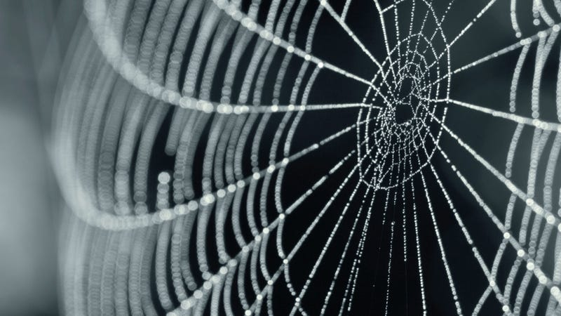 Skin Made from Spiderwebs: No Longer Just a Nightmare