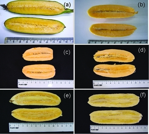 Genetically-Modified Orange Bananas Are Ready for Human Testing