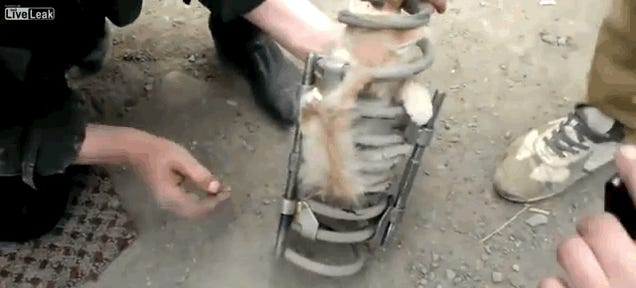 How The Hell Did This Cat Get Stuck In A Jeep's Coil Springs?