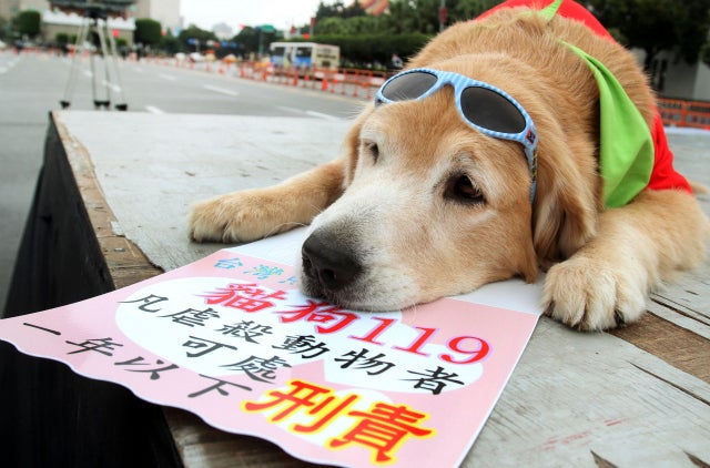 Political Pooch Looks Pooped