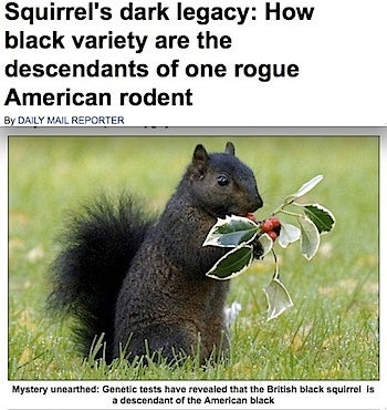 American Blacks Blamed For British Squirrel Genocide