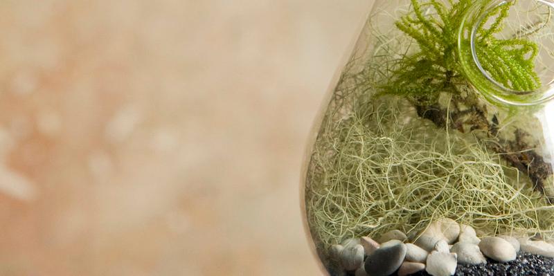 Gardener Claims He Hasn't Watered This Flourishing Biosphere Since 1972