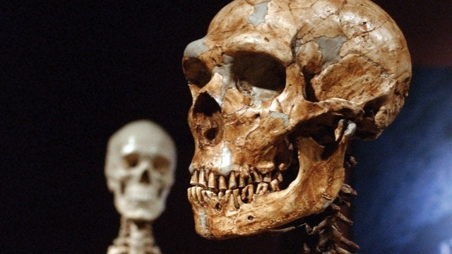 Ancient humans may not have interbred with Neanderthals, after all