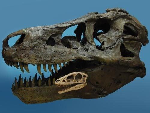 Meet T-Rex's Diminutive Ancestor