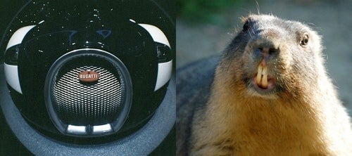 Separated at Birth: Bugatti Veyron vs. Groundhog