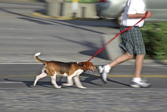 Pet Owners Beware: There's a Dog Walker Grifter