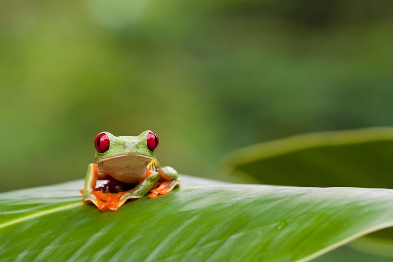 Baterías de coche y un iPod: así se captan los sonidos de la selva
