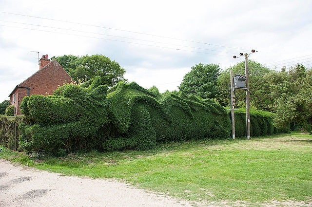 Man Keeps His Home Safe With a Dragon Hedge