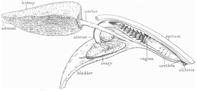 This Is What a Dolphin's Vagina Looks Like