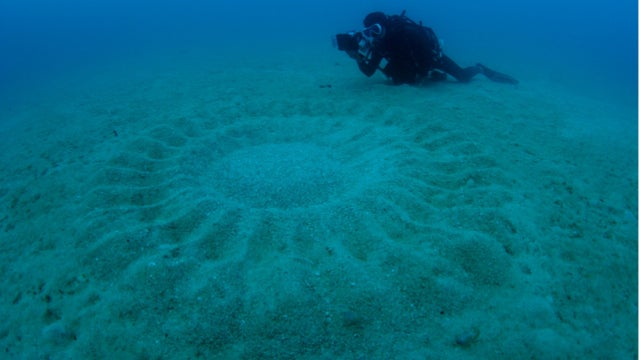Japan's Mysterious Underwater Circles Are Lovely