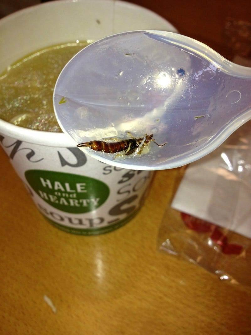 Can You Identify This Bug That a Reader Says He Found in a Cup of Hale and Hearty Soup?