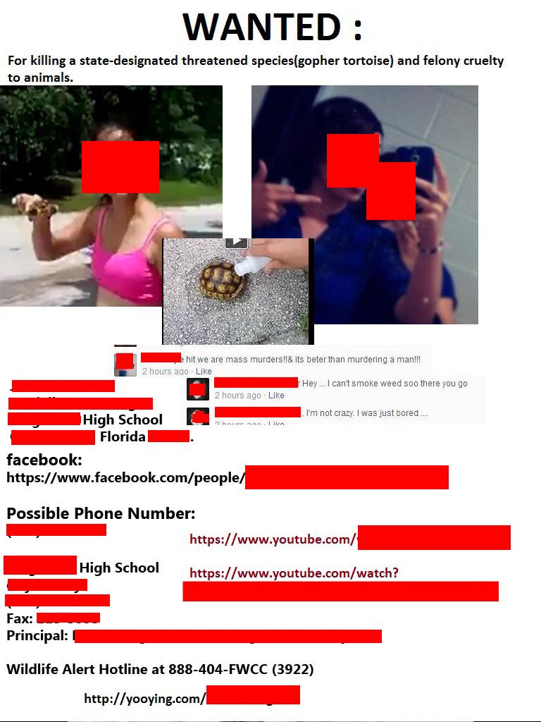 Teen Girls Burn, Stomp Rare Tortoise to Death, Put Video on Facebook