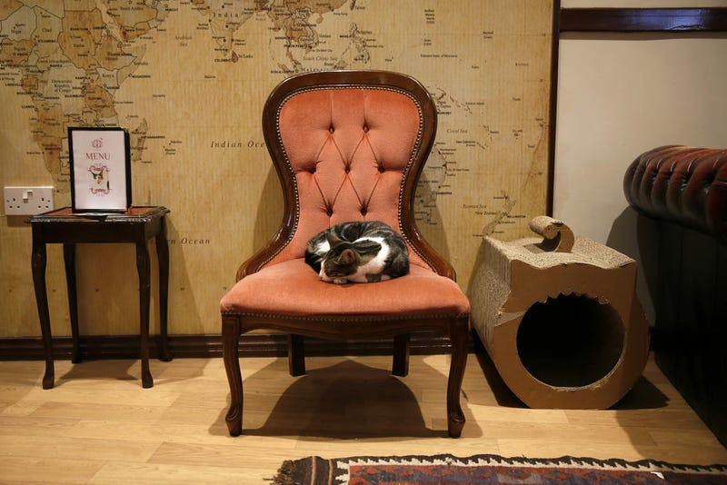 Busy? Stressed? Go take a load off at Miss Dinah's Cat Emporium