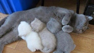 """The Kitten Color Printer Ran Out Of Ink And Toner"""