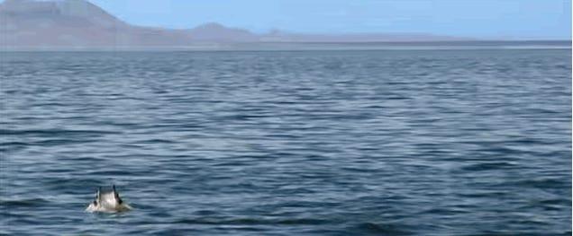 A Horde Of Mobula Rays Invades Baja