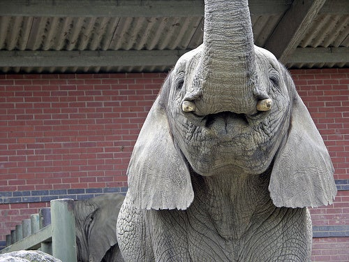 Elephant-Subduing Device Appears Inspired by Star Wars