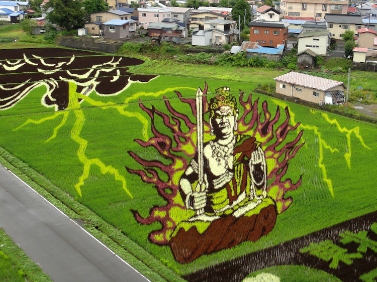 Behold These Incredible Artworks Grown from a Rice Field in Japan