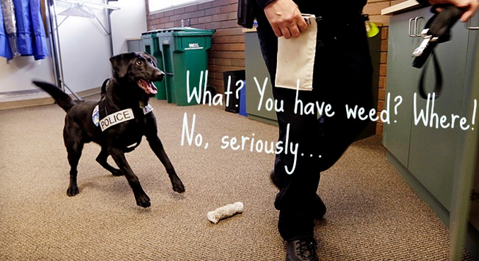 Washington State Has to Retrain Weed-Sniffing Dogs