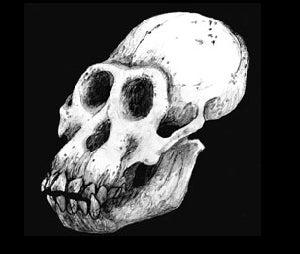 """Discovery of 4.4-Million-Year-Old Hominid """"Ardi"""" Is Greatest Scientific Breakthrough of 2009"""