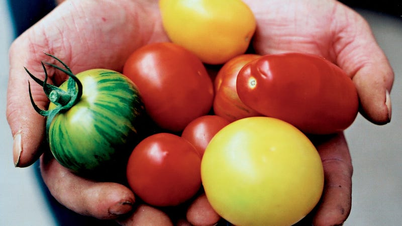 The Science of Tasty Tomatoes