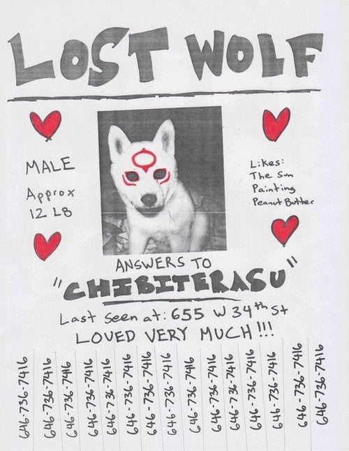 Have You Seen This Wolf Pup?