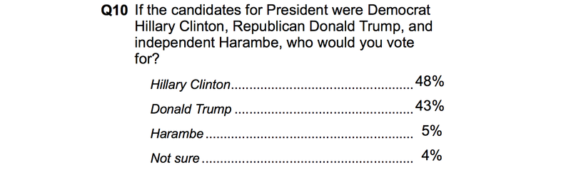 Poll: Five Percent of Americans Would Vote Harambe the Dead Ape for President
