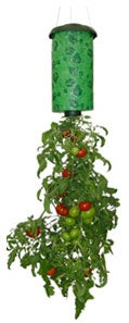 Grow your tomatoes upside down