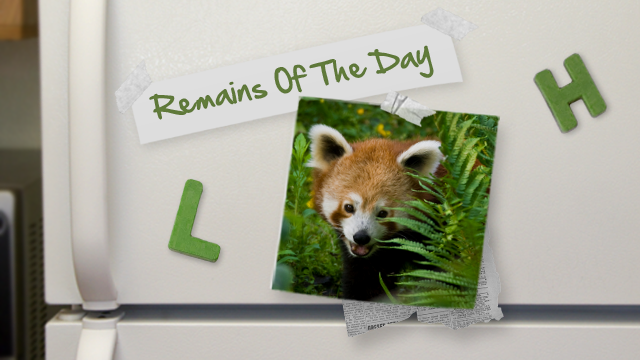 Remains of the Day: Mozilla Reminds Us that Do Not Track Was Their Idea