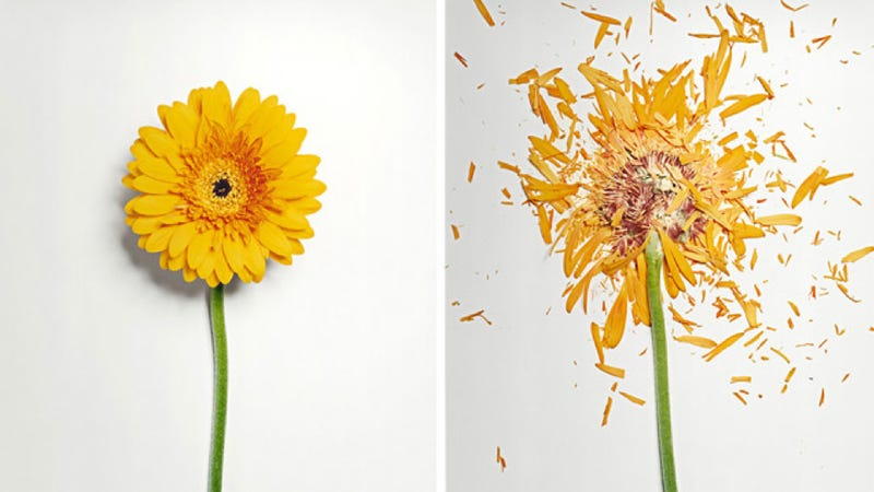 Flowers + Liquid Nitrogen = Beautiful Shattered Brilliance