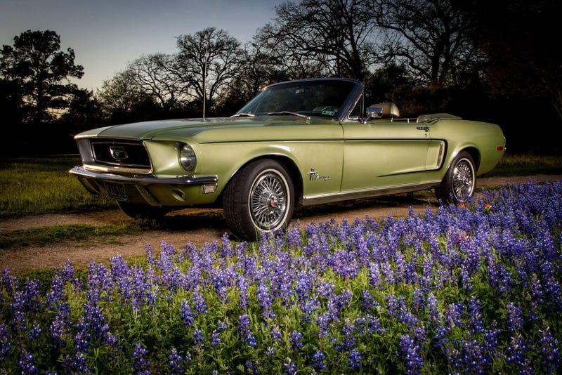 Happy Birthday, Mustang