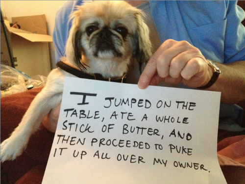 Tumblr of the Day: Dogshaming