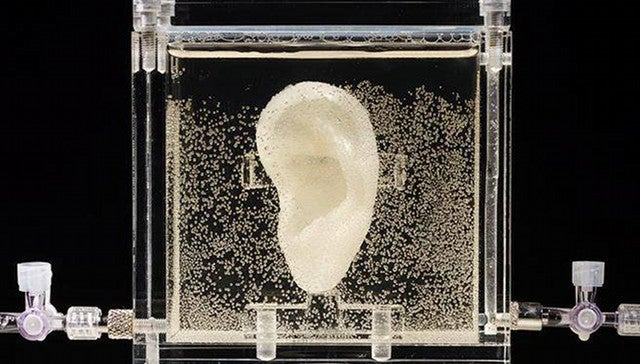 A Replica Of The World's Most Famous Ear Is Now On Display