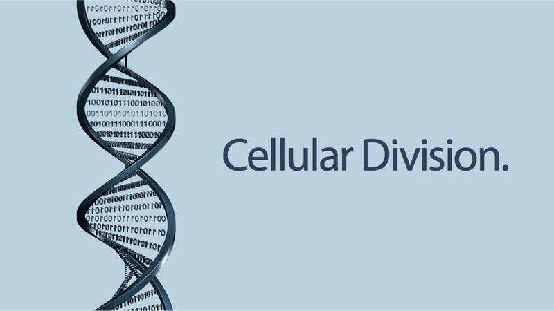 Biological Cells Can Now Do Arithmetic