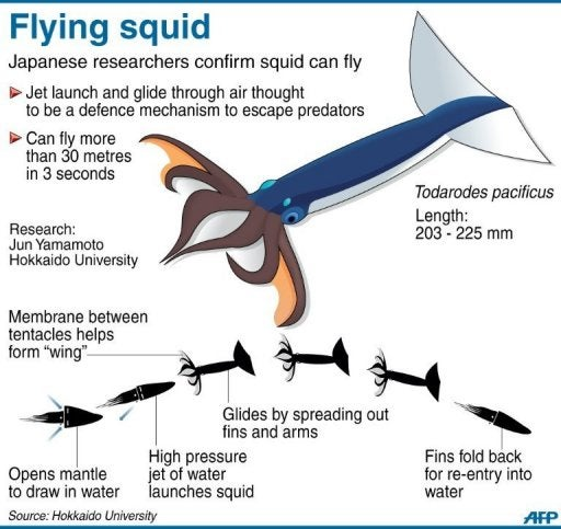 Marine biologists confirm squid can fly