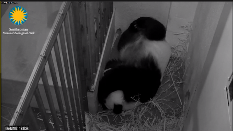 Government Shutdown Might Kill An Adorable Panda... Cam