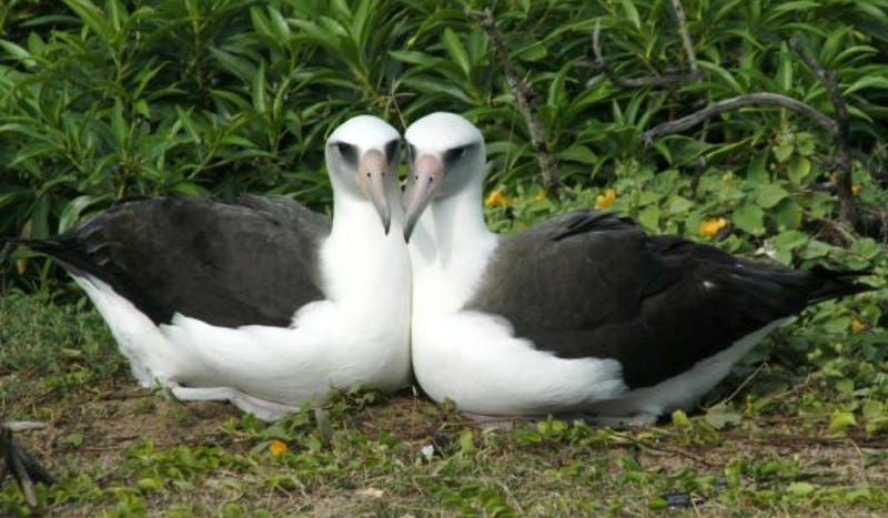 Nope, these birds are not lesbians