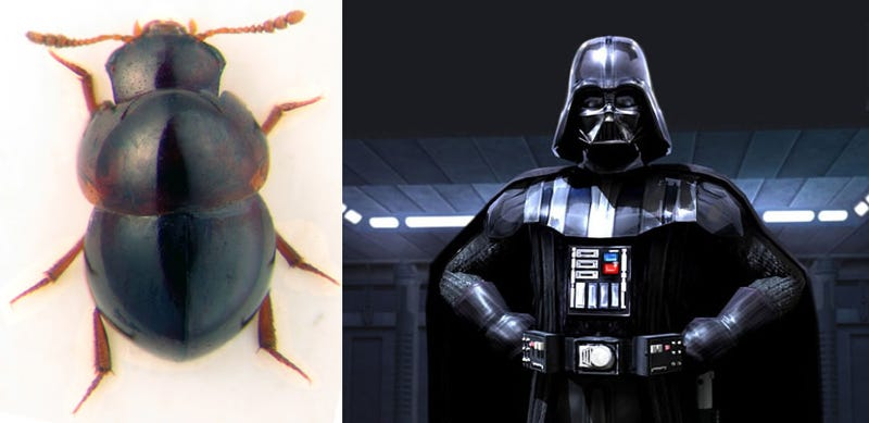 30 Real Animals with Science Fiction Names