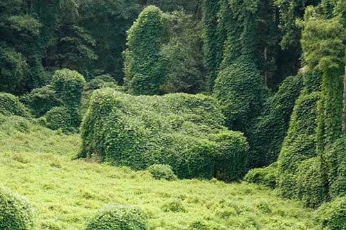 How the kudzu invasion is poisoning the air with ozone