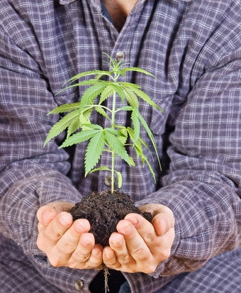 Pot Growers Unionize in California