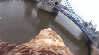 Take A Tour Of London On The Back Of This Eagle