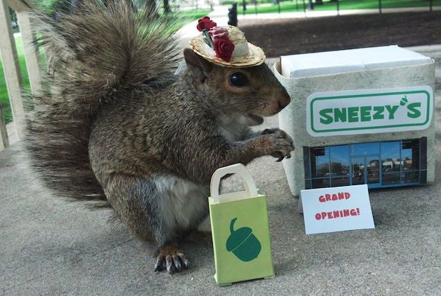 "Penn State Junior Dresses Up, Whispers With Squirrel Named ""Sneezy"""