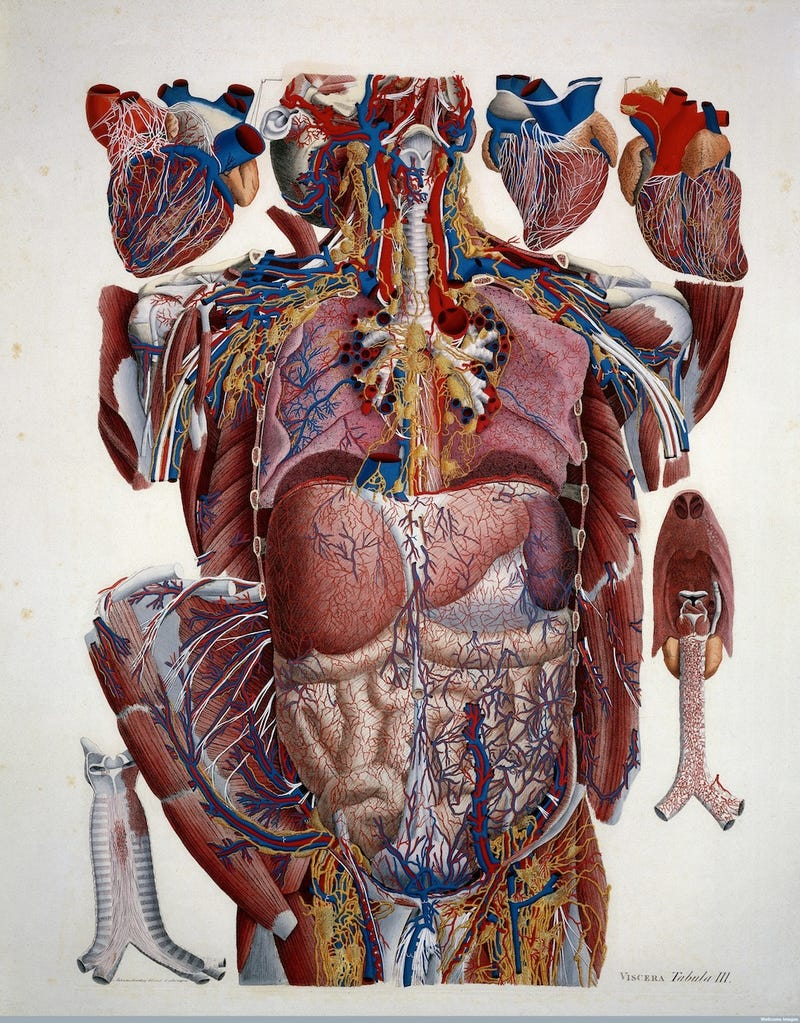 Feast your eyes on this treasure trove of old medical illustrations