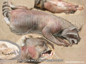 Is The Montauk Monster Satan's Bacon?
